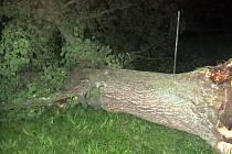 Spadlý strom po bouřce na Kroměřížsku