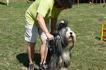 Na snímu Jana Proroková se svými psy, v sobotu se spolu zúčasnili šestého ročníku Holešovského hopsání.
