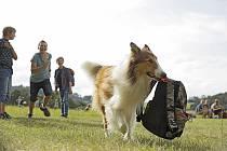 Z filmu Lassie se vrací.