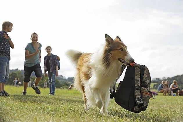 Zfilmu Lassie se vrací.