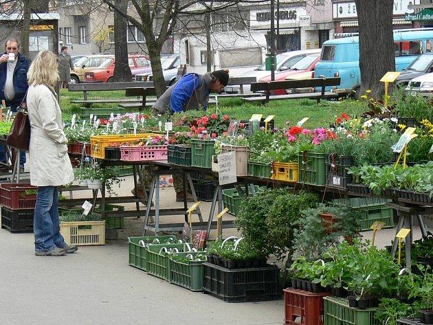 Tržiště na ulici Vejvanovského