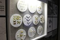 Stálá expozice Muzea Kroměřížska s názvem Příroda a člověk bude návštěvníkům přístupná pouze do neděle 7. ledna. Po dokončení oprav v muzeu ji v polovině roku nahradí nová stálá expozice zaměřená na dějiny Kroměříže.