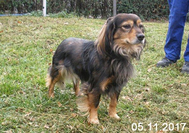 TOI. Čtyřletý kříženec menšího vzrůstu Toi je klidný a hodný pes, pouze zpočátku je trochu nedůvěřivý. I se svými sedmi kilogramy se hodí na dvorek nebo zahrádku.