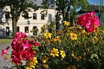 Květiny. Ilustrační foto.