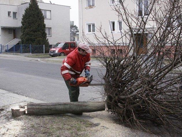 Po kácení stromů přijde na řadu výsadba