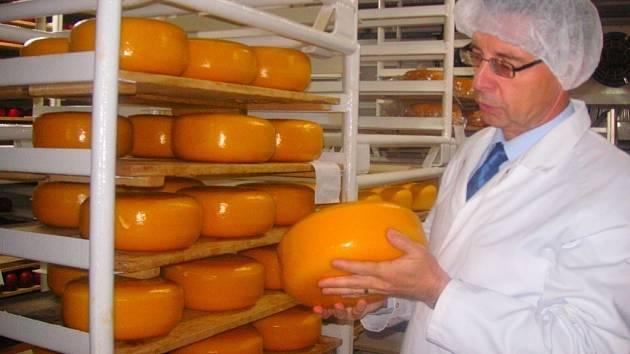 Pětikilový sýrový bochník. Tento polotvrdý druh sýru typu gouda zraje pod voskem.