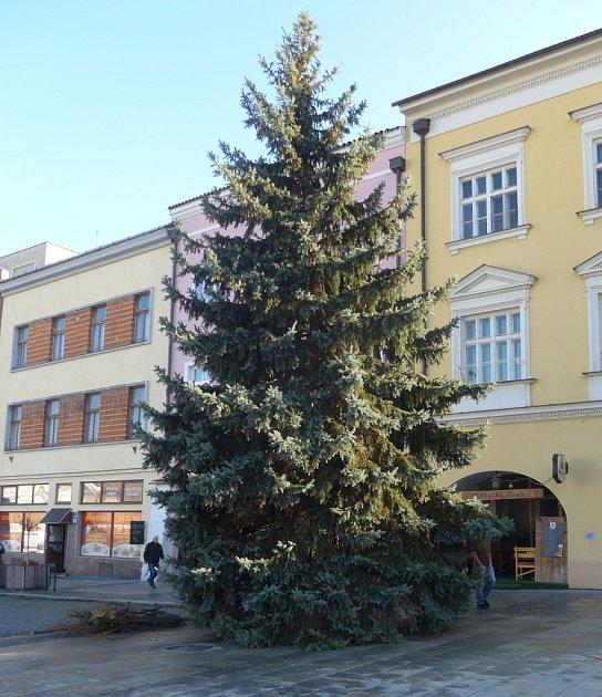 Vánoční strom vztyčili vpondělí 21.listopadu na Velkém náměstí vKroměříži. Třináct metrů vysoký smrk bude slavnostně rozsvícen ve čtvrtek 24.11.