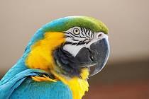 Burza drobného zvířectva a okrasného ptactva.