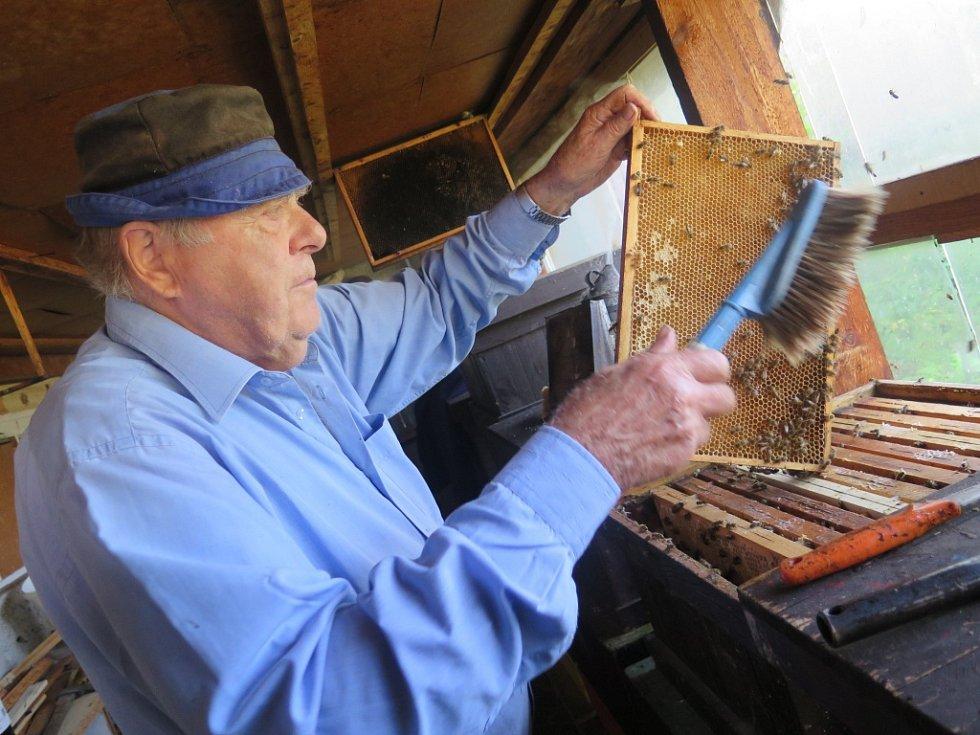 Po vyjmutí plástu z úlu je potřeba omést včely. K tomu Vlastimilu Zatloukalovi postačí obyčejný smetáček.