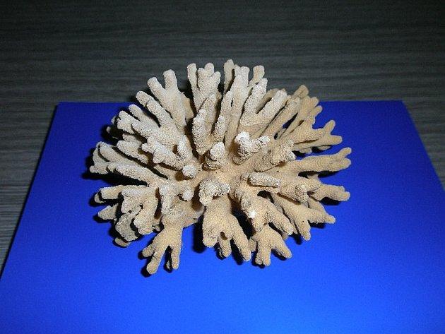 Mošnovští celníci zabavili přes dvacet vzácných korálů. Jako vzpomínku na exotickou dovolenou si je dovezli domů se vracející turisté, kterým se tak zkomplikoval návrat z cest.
