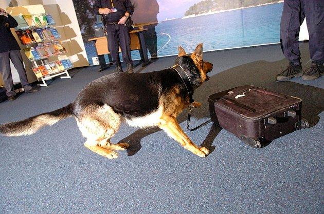 Účastníci bezpečnostního školení se na mošnovském letišti dozvěděli, jak postupovat při nálezu pašovaných zvířat nebo drog.