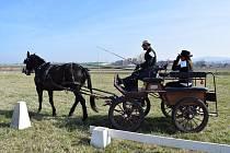 Stáj Davida Haitla z Bernartic nad Odrou pořádala o posledním březnovém víkendu letošního roku vozatajské zkoušky.