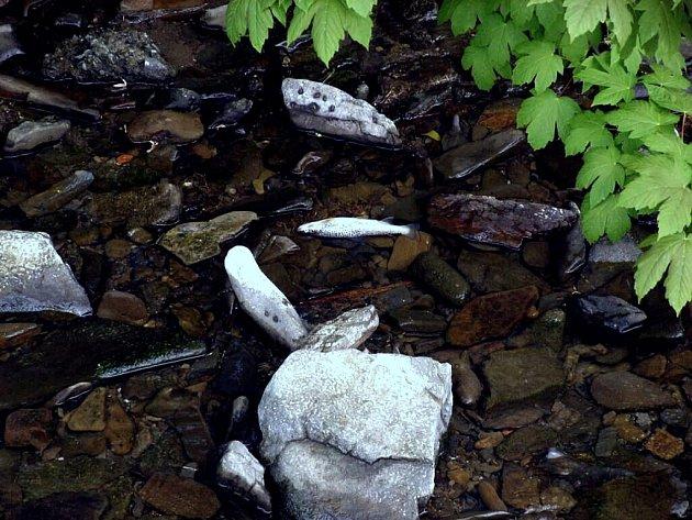 Dolní tok Gručovického potoku zeje prázdnotou. Došlo zde v pondělí k hromadnému úhynu ryb, který má podle místních rybářů na svědomí chlór.