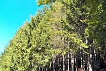 Část pozemku s lesem, který prodal Úřad pro zastupovaní státu ve věcech majetkových v aukci za 150 tisíc korun.