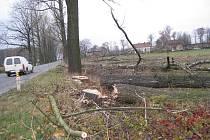 Alej topolů u silnice v Suchdole nad Odrou zanedlouho zmizí.