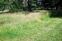 Vzrostlou trávu v Novém Jičíně pokosí nová sekačka. Ilustrační foto: archiv Deníku