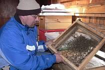 Při kontrole včelích buněk po zimě čekal František Vavruše neradostný pohled. Mnoho včel totiž uhynulo.