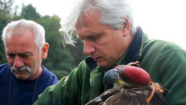 Do volné přírody se v úterý 2. října vrátil otrávený orel mořský, který byl od 17. srpna v péči pracovníků Záchranné stanice pro volně žijící živočichy v Bartošovicích na Novojičínsku.