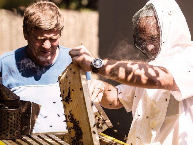 Tomáš Staněk (vpravo) vysunuje jeden ze čtrnáctí rámků, do kterých včely snášely med.