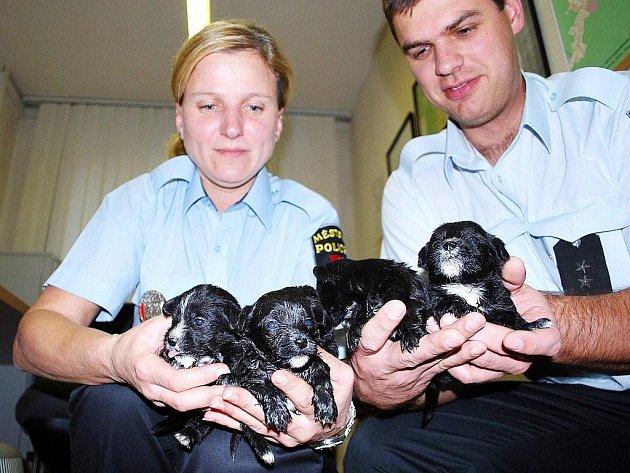 Pět štěňátek našlo dočasný azyl také v rukou novojičínských strážníků Ilony Majorošové a Pavla Růži.
