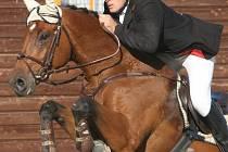Vítězný jezdec  Velké ceny ITALPE, kterou v Dolní Moravici hostil jezdecký klub Hamříkova stáj, Tomáš Bajnar na koni Landjunker, z jezdeckého klubu Baník Ostrava.