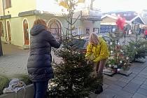Dva ze stromečků v Havlíčkově ulici ve Frenštátě pod Radhoštěm mohou nazdobit také občané. Prosinec 2020.