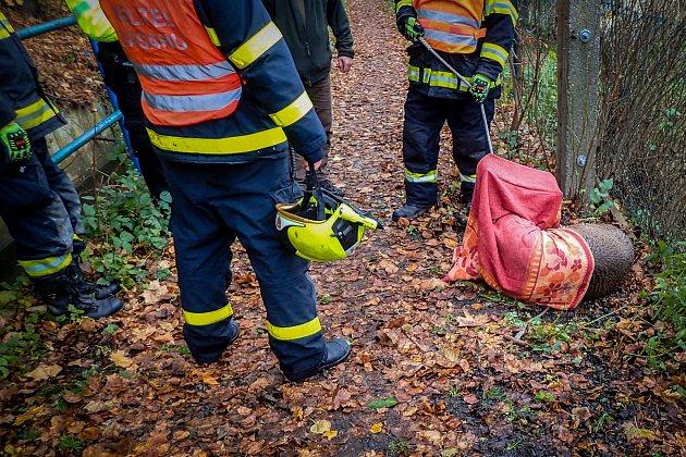 Záchranu na našem území ne příliš rozšířeného zvířete si vúterý 10.listopadu vyzkoušeli hasiči ze stanice HZS MSK vBílovci a dobrovolná jednotka města Odry.
