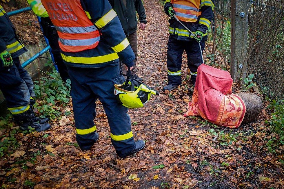 Záchranu na našem území ne příliš rozšířeného zvířete si v úterý 10. listopadu vyzkoušeli hasiči ze stanice HZS MSK v Bílovci a dobrovolná jednotka města Odry.