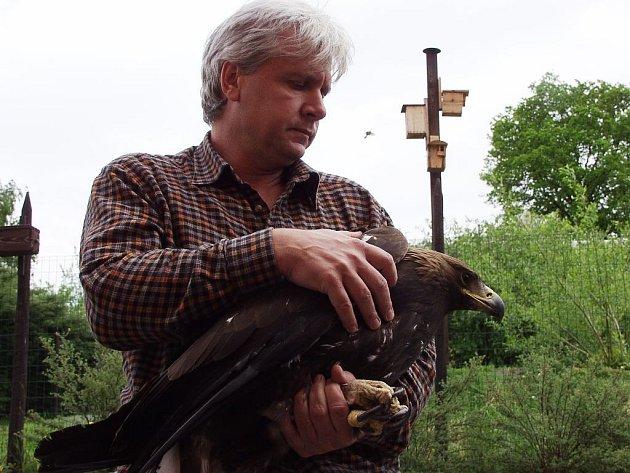 Návrat orla skalního do volné přírody se bartošovickým ochranářům daří.