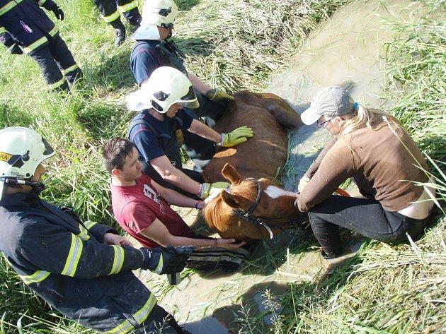 Hasiči při záchraně koně.