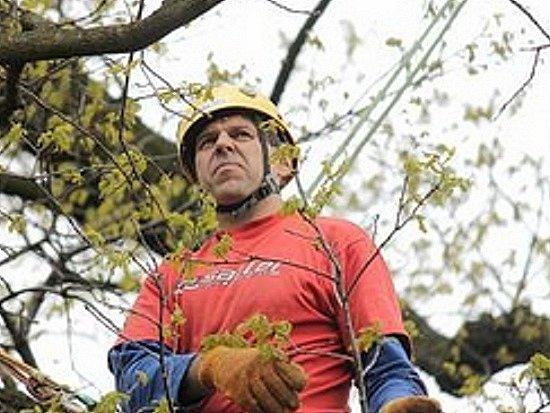 Arborista Lukáš Oliva při ošetření stromu.