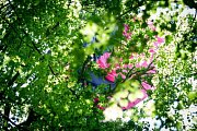 Dvě jednotky profesionálních hasičů se zapojily v pátek odpoledne do záchrany staršího paraglidisty, který místo na pevné zemi skončil v koruně mohutného stromu v Odrách na kopci Vítovka.