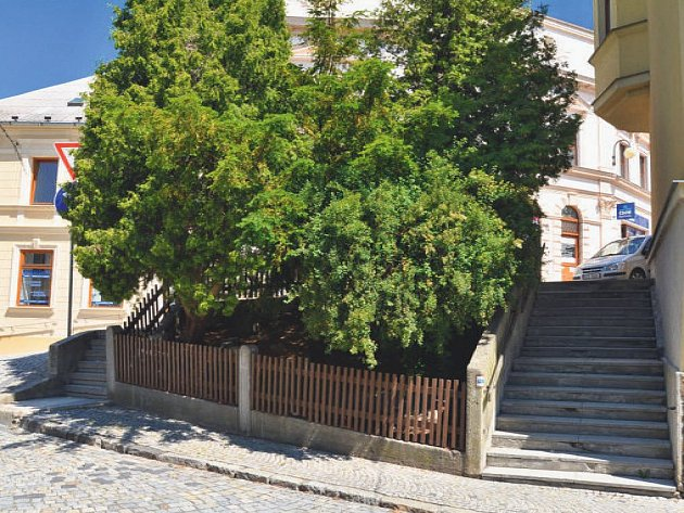 Město nechalo zpracovat architektonickou studii, která se zabývá možností využití a zkulturnění stávající svažité plochy v blízkosti městských schodů a jejich celkovou rekonstrukcí.
