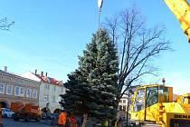 Vánoční strom ve Frenštátě pod Radhoštěm je letos o něco nižší, než jindy, ale je krásný.