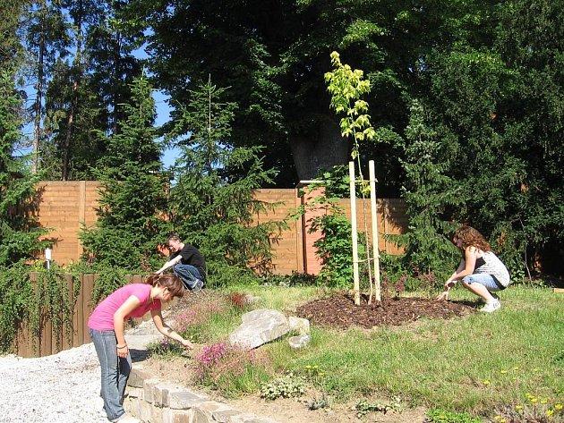Stromy a keře zkrášlí zelené prostranství obou středních škol. Společná práce pedagogů a studentů přinesla své ovoce.