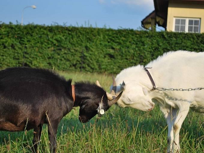 Zvířata z farmy manželů Stránských.