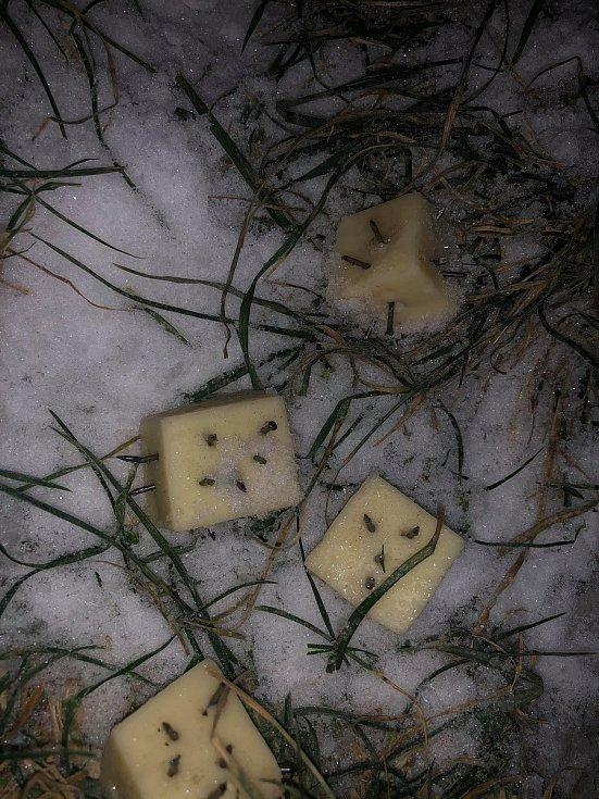 Fotografie, které nasdílel na sociální síť údajný nálezce sýrů.