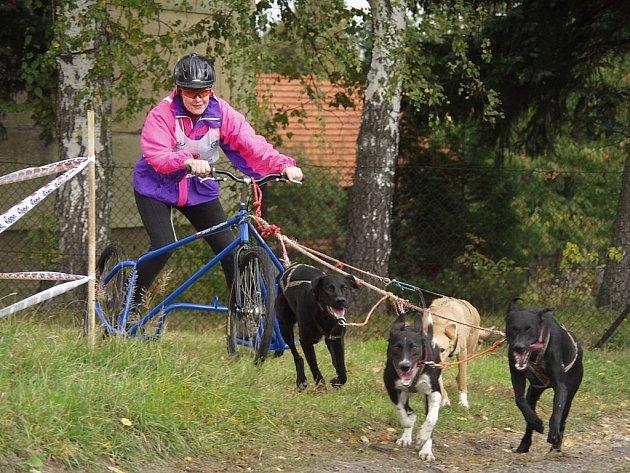 Helena Levíčková v kategorii C - spřežení do 4 psů bez rozdílu plemen.