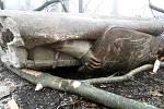 Jen poničené torzo zůstalo ze sochy svatého Václava v Národním sadu ve Štramberku po pádu stromů.
