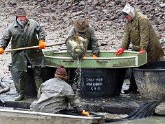 Poprvé se uskutečnil ve čtvrtek 17. listopadu výlov Galerijního rybníka v Jistebníku.