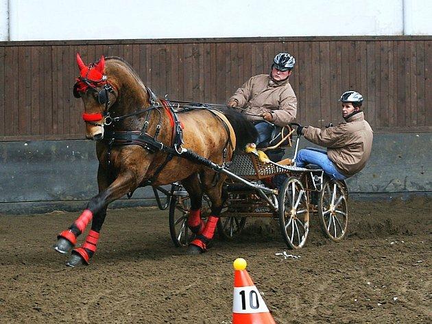 Vítěz jednospřeží Marek Jirgala na koni Maximus P z JK Hřebčín Albertovec.