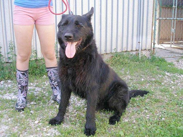 Představujeme psí obyvatele kopřivnického útulku, kteří stále hledají nové majitele. Pokud se vám nějaký pes zalíbí, neváhejte kontaktovat správce útulku.