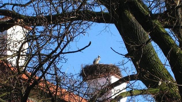 Čáp Viktor na jednom z komínů kunínského zámku. Ilustrační foto.