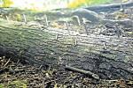 Nebezpečné hřebíky se nacházely na Puntíku na obou trasách.