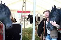 FRIEZŠTÍ královští koně jsou hlavními hvězdami letošního turné cirkusu Bernes. Jejich volný výcvik lze spatřit jedině zde.