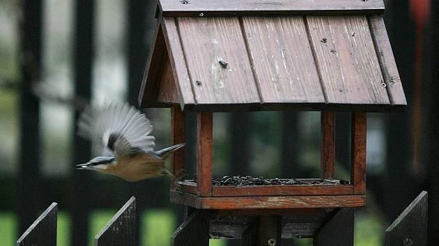 Staré pečivo, vánočky nebo dokonce uzeniny ptákům podle ornitologů škodí.