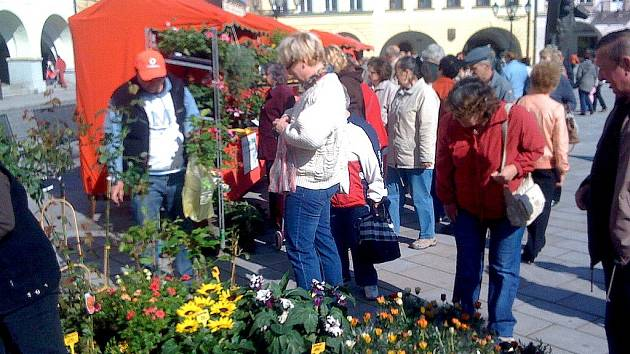 Město chce oživit: květinový jarmark na novojičínské náměstí lidi přilákal.