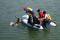 Vetřkovická přehrada v Lubině zažila ve čtvrtek a v pátek první ročník mezinárodního soustředění speciální kynologické záchranné služby. Během něj záchranářští psi nacvičovali komplikované vyhledávání utonulého.