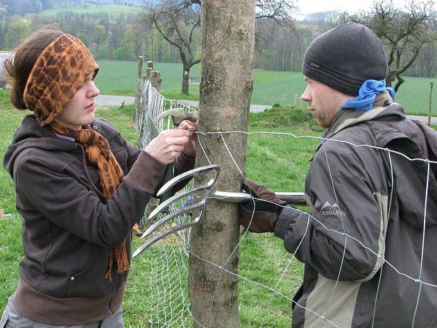Členové Hnutí Brontosaurus pomáhají od pátku se zakládáním sadu ve Štramberku. Kromě sázení mladých stromků museli také udělat ohradu.
