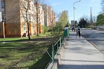 Hlavní tah městem léta lemovaly vzrostlé stromy. Drtivá většina z nich musela být skácena kvůli revitalizaci staré silnice.